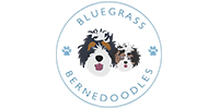 Bluegrass Bernedoodles